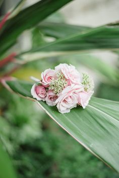 Photo from Kayla+Ben collection by Matt and Julie Weddings Brides, Weddings, Rose, Flowers, Plants, Beautiful, Collection, Design, Pink