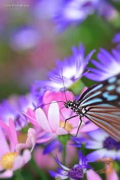 Paradise of Butterfly by *WindyLife on deviantART
