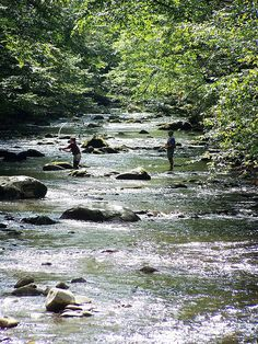 Wading, Elkmont, Smoky Mtn Tennessee | the Elkmont campground was our favorite.  JAG Flickr - Photo Sharing!