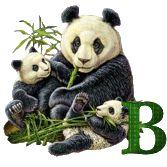 Alphabets Pandas 21-01-2016