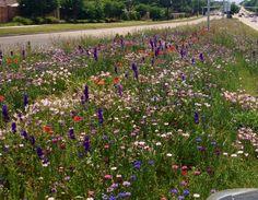 Ricardson has bloomi