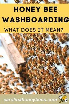 How To Start Beekeeping, Beekeeping For Beginners, Honey Bee Facts, Bee Activities, Backyard Farmer, Dairy Cattle, Bee Do, Backyard Beekeeping, I Love Bees