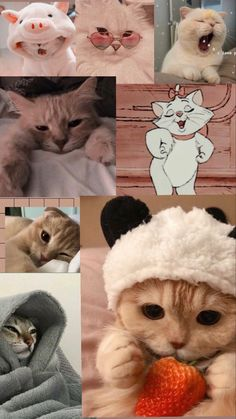 Cute Baby Cats, Cute Little Baby, Cute Baby Animals, Cute Babies, Funny Cat Wallpaper, Purple Wallpaper Iphone, Cute Animal Photos, Funny Animal Pictures, Disney Art Diy