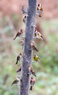 Full House! by SteveJM2009, via Flickr