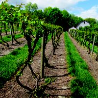 Vineyards and Wineries of the Hudson Valley, Upstate NY - Hudson Valley Magazine - July 2012 - Poughkeepsie, NY