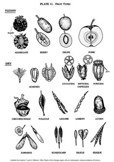 botanical terms - Google Search