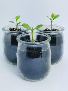 Love Garden, Garden Art, Green Life, Growing Plants, Permaculture, Horticulture, Outdoor Gardens, Planting Flowers, Gardening Tips