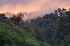 Fog and morning light around campground in the cloud forests of El Triunfo Biosphere Reserve, in the Sierra Madre del Sur range in Chiapas, Mexico