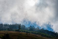 有如仙境的黑森林 by Honta, via Flickr
