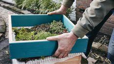 Placez à présent le cadre extérieur au-dessus du cadre intérieur végétalisé... Bosch, Decoration, How To Dry Basil, Diy, Herbs, Gardens, Home Made, Decorating, Do It Yourself