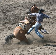 Horse and cowboy work as unified pair to bring down a roped steer by Daniel Hagerman