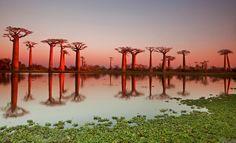 Avenue de Baobab,Madagascar, Africa