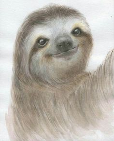 This sloth is just so cute 🥰 Cute Sloth Pictures, Sloth Drawing, Animals Beautiful, Cute Animals, Sloth Tattoo, Cute Baby Sloths, Bird Illustration, Watercolor Illustration, Watercolour