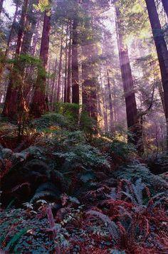 Redwood National Park  historichotels.org
