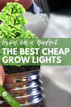 Just because your garden is growing doesn't mean your bank account needs to shrink! There are some incredible, affordable grow lights out there that will help your greenery thrive without costing you too much green. Whether you are looking to support a winter garden, anticipating year-round produce, or have a cash crop, this guide has the perfect affordable grow light for you. #ledlights #growlights #indoorgardening #seedstarting Cheap Grow Lights, Led Grow Lights, Grow Lights For Plants, All Plants, Cash Crop, Plant Growth, Photosynthesis, Types Of Lighting, Plant Needs