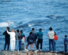 Whale Watching Hotspot - Hermanus, South Africa by windsorhotel, via Flickr