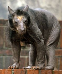 Do You Recognize These Animals Without Hair?