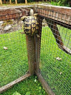 This athletic fellow who proves that tortoises are far from lazy. 19 Turtles (And Tortoises!) You Can't Believe Even Exist Tortoise House, Tortoise Habitat, Tortoise Table, Cute Tortoise, Baby Tortoise, Turtle Time, Turtle Pond, Turtle Aquarium, Nano Aquarium