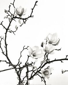 This is the flower.... magnolia!!!!! Need to change shape... but LOVE this,