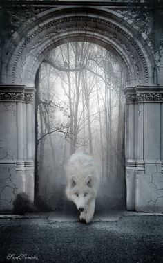One of the wolves of the Borderlands, seen entering the Hall of Doors