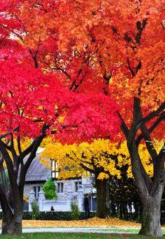 Herbst im Seefeld - Zürich