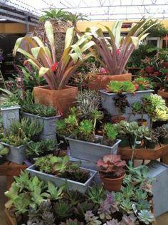 Garden Center, Succulent, Succulent display,