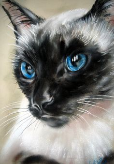 Art - Royal Blue by astarvinartist - Siamese cat in pastel and paper by Paul Knight. Pastel Portraits, Pet Portraits, Pretty Cats, Beautiful Cats, Animal Paintings, Animal Drawings, Siamese Cats, Cats And Kittens, Knight Art