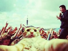 A cat selfie in front of Chino Moreno. This just won the internet