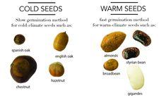 semi misti per il germinatore small - R nel bosco - Reggio Emilia