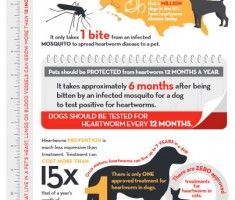 Heartworm prevention in dogs