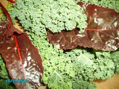 Dwarf Blue Curled Kale and Bright Lights Swiss Chard