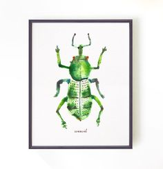 Insect print Weevils art print Watercolor art Wall Decor Wall art Wall decor Art home decor Wall hanging Green decor Beetle Bugs Entomology by colorZen on Etsy https://www.etsy.com/listing/237138876/insect-print-weevils-art-print