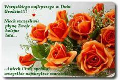 What to do with Orange Roses? Orange Uk, Orange Flowers, Yellow Roses, One Rose, Celebration Gif, Rainbow Roses, Pink Rose Flower, Home Garden Plants, Colorful Roses