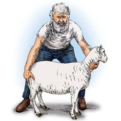 How to Shear a Sheep in 20 Steps - Animals - GRIT Magazine