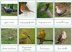 cartes de nomenclature sont téléchargeables oiseaux