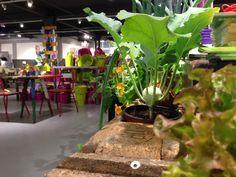 Im grössten Urban Gardening Shop der Schweiz, ist die Auswahl vielfälltig Popup, Shops, Urban Gardening, Plants, Switzerland, Shopping, Lawn And Garden, Tents, City Gardens