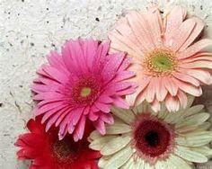 Se trata de flores y animales