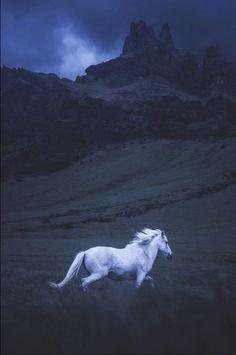 White horse running in the blue moonlight.
