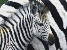 Edward Spera Gallery / New Beginnings - Baby Zebra