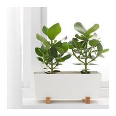 IKEA - BITTERGURKA, Plant pot  Would look cute with succulents on the couch shelf. Cheaper than the West Elm pots.