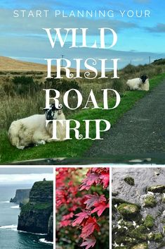 Planning an Irish Ro