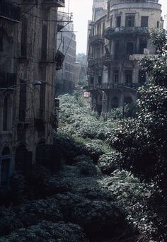 Abandoned city taken over by trees/plants