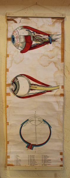 Vintage Original Medical Chart - The Eye