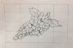 Fundamentals of sketching (e) organic object - bunch of grapes