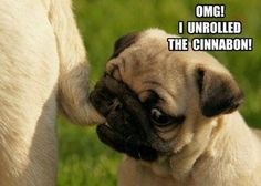 Funny Pug Dog Meme Pun Lol Funny Pug Dog Memes Lol
