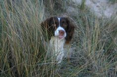 Alice in the dunes at Liseleje