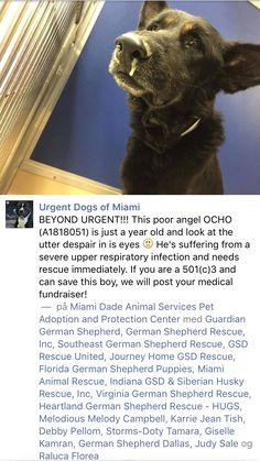10/12/16 OCHO IS SICK AND NEEDS OUT!! PLEASE SHARE!! HAS A RESCUE HOLD BUT PLEASE SHARE UNTIL OUT OF THE BUILDING!! /ij  https://m.facebook.com/urgentdogsofmiami/photos/ms.c.eJwtyMERACAIA7CNPAq00P0X04d5BoUWB2IWi3HwYhAW1lLND4eXynZcATsKIw~-~-.bps.a.1067105343323868.1073742077.191859757515102/1314719098562490/?type=3