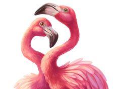 Pink flamingos by Elena Selivanova - Dribbble