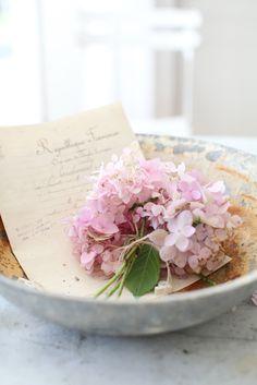 Fresh Flowers, Pretty In Pink, Beautiful Flowers, Pink Hydrangea, Hydrangeas, Bouquet, My Flower, Flower Power, Vintage Flowers