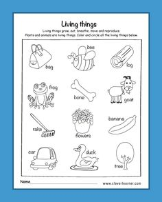 37 Best Preschool Science Activity Worksheet images ...